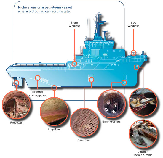 area vessel biofouling accumulate