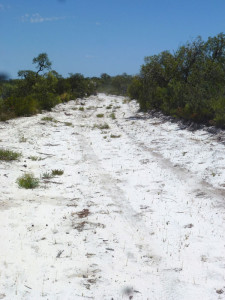 A deserted access road that will lead to the rig site on Warrego Energy's Block 469 shows the remoteness of the location. The operator said rig clubs could be possible to help operators share mobilization costs.